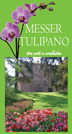 messer-tulipano-2012_loc-244x450