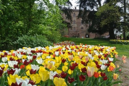 thumbnail_526_pralormo-tulipani-20121